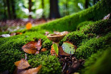 Autumn scene with mushrooms in the forest von Fotografiecor .nl