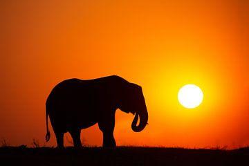 Afrikaanse olifant met zonsondergang van Caroline van der Vecht