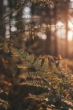 Varen in het bos van Tessa Dommerholt