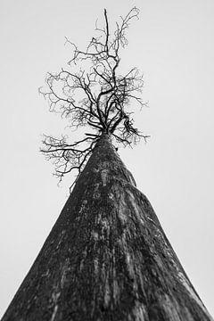 Was in einem Baum steckt von Rik Verslype