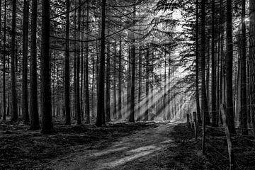 Zon door de bomen op de Veluwe. van Don Fonzarelli