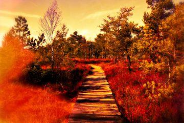 Moorlandschaft von Claudia Evans