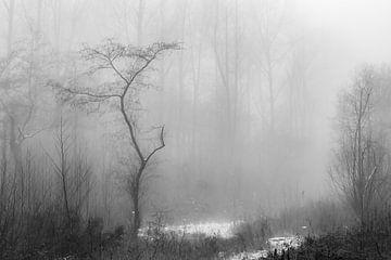 mystieke landschap von eric brouwer