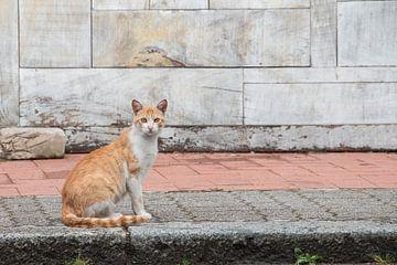 Portret van een zwerfkatje in Italië. van Aukelien Minnema