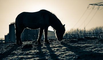 Last daylight silhouette von Ingeborg Ruyken