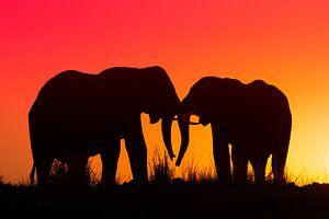 Silhouet van twee olifanten in de ondergaande zon van