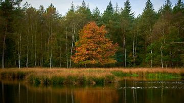 Waldgrenze am Pluizenmeer von Jenco van Zalk