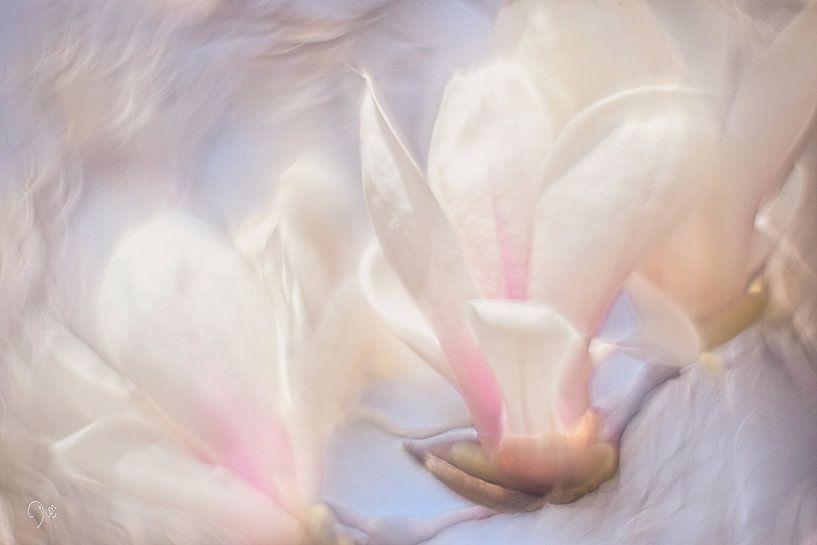 Magnolia van Dion de Bakker