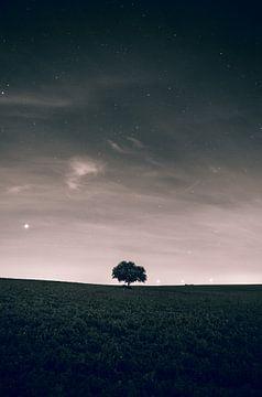 boom van Christophe Van walleghem