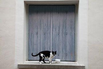 Zwart wit kat van