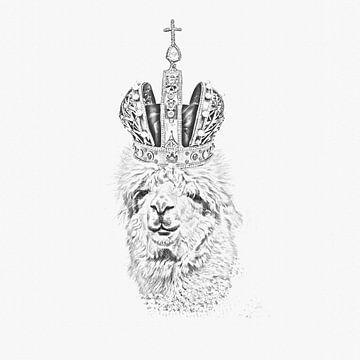 Alpaka mit Krone von Felix Brönnimann