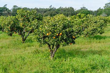Orangefarbenes Feld von Deborah Zannini
