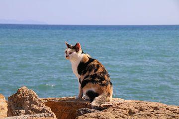Kat op steen bij de zee van Mattis Vollertsen