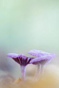 Violette Pilze von Irma Grotenhuis