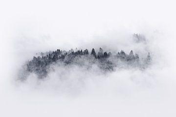 Bomen door de mist von Bert Buijsrogge