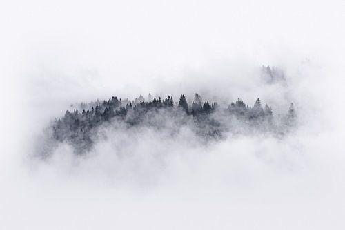 Bomen door de mist van