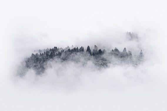 Bomen door de mist