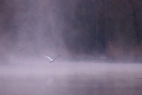 Zilverreiger in de mist in de Brabantse Biesbosch