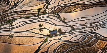 Rijstvelden in het zuiden van China van Chris Stenger