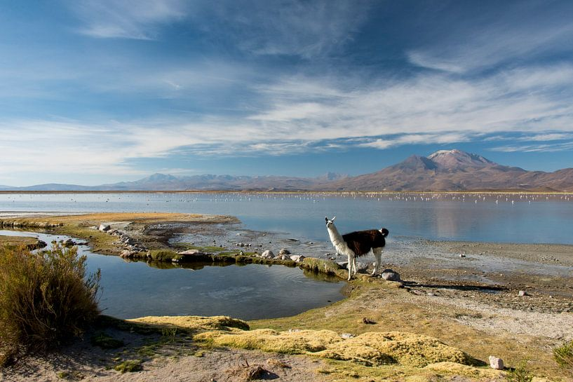 Laguna Macaya van Abe Maaijen