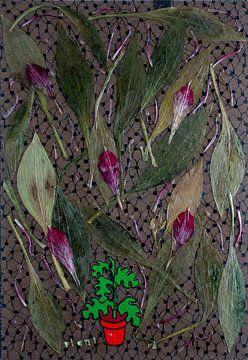 Plant van Susan Hol