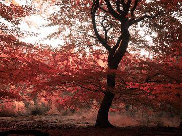 Herbst von Wendy Drent