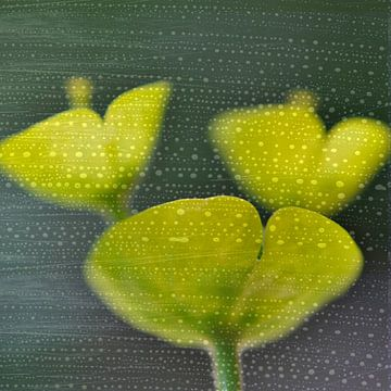 Corolles végétales sur Martine Affre Eisenlohr