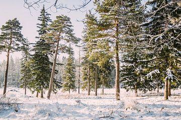 Sonniger Wald im Winter von Patrycja Polechonska