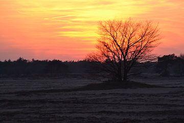 zonsondergang op de oirschotseheide van tiny brok