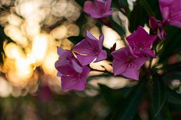 Blumen von Martijn Diepenbach