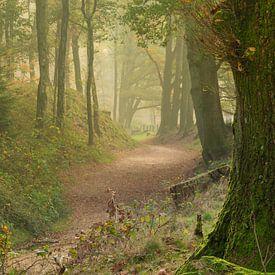 Avenue forestière aux couleurs d'automne avec une touche de brume sur Michel Knikker