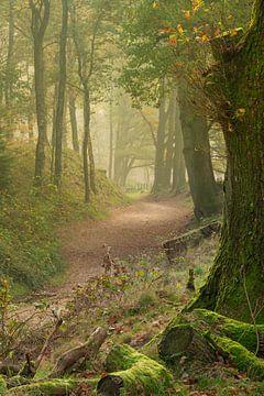 Avenue forestière aux couleurs d'automne avec une touche de brume