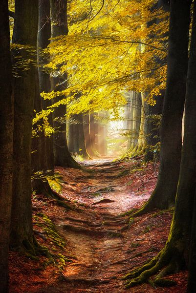 Path of the Mystic van Lars van de Goor