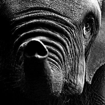 Eléphant triste sur Peter van Nugteren