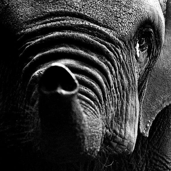 Droevige olifant van Peter van Nugteren