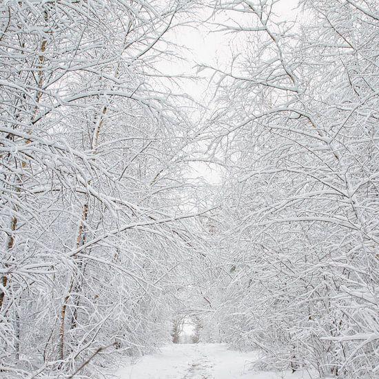 Sneeuw op de Utrechtse Heuvelrug