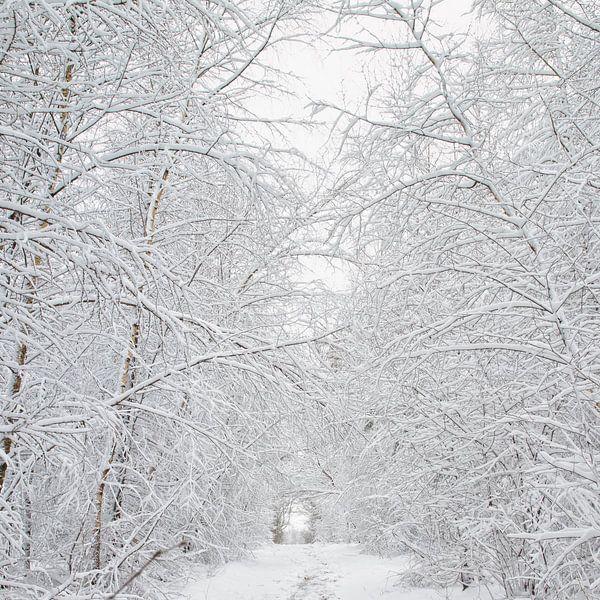 Sneeuw op de Utrechtse Heuvelrug van Jacques Jullens