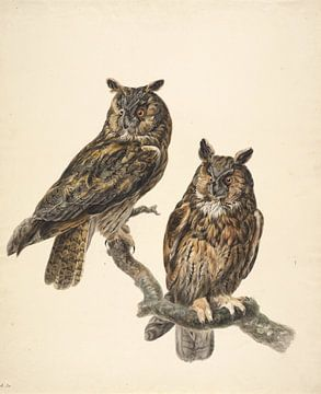 Zwei Eulen, Stephanus Hendrik Willem van Trigt von Teylers Museum