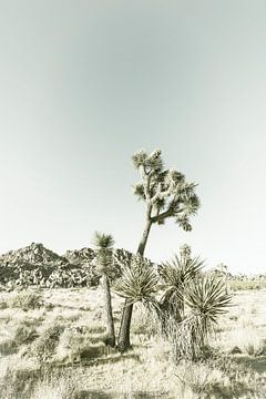 Vintage Joshua Tree von Melanie Viola