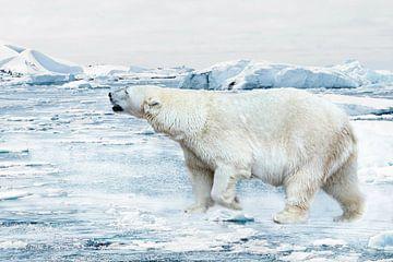Eisbär sur Heike Hultsch