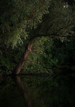 Baum in der Nähe des Wassers (Niederlande) von Marcel Kerdijk