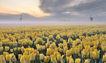 Tulpenveld Schermerhorn van John Leeninga