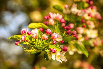 Boom vol in bloei von Stedom Fotografie