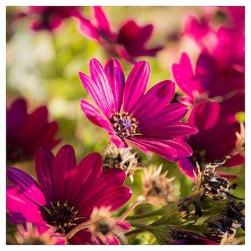 Bloemen in het vierkant van Arthur Pfaff