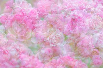 Dromerige roosjes van Francis Dost