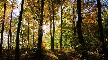 Herfst In Het Bos van Daphne Photography