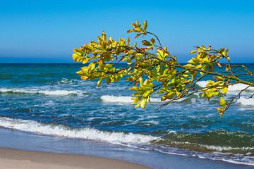 Tree on the Baltic Sea coast van