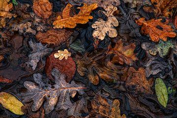 Die Farben des Verfalls von Lars van de Goor