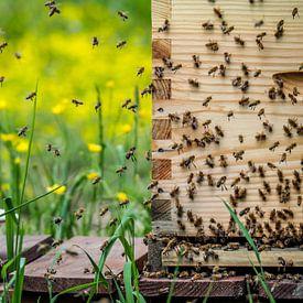 Buzzy bees van Miriam Meijer, en plein campagne.....
