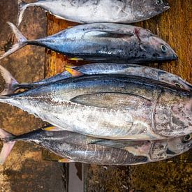 verse vis van Ruurd Dankloff